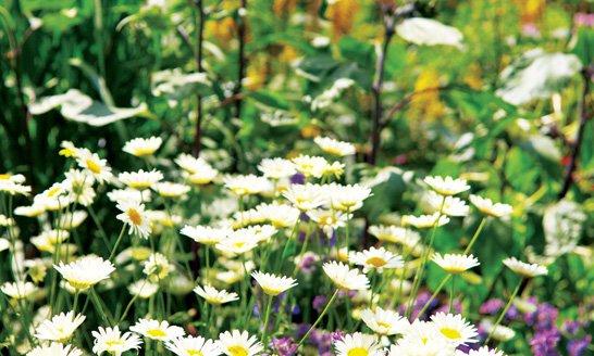 Flowers at Coed Craig